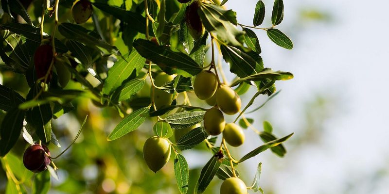 csm_bulthaup-gourmet-aceituna-andalucia-3_52042994e0
